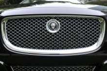 jaguar_(artvlive CC)