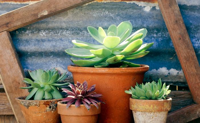 Best Pot Plants For Sun And Shade Burke39s Backyard