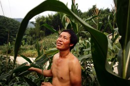 A farmer stands in his corn fields near one of southern Sichuan's bamboo forests.