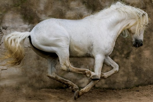 02._White_Stallion__Mexico__2004