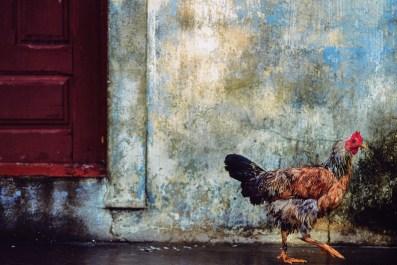 17._Chicken__Brazil__1992