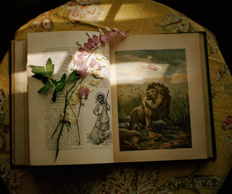 lion book pressed flower 001
