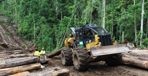 Forestry leader says PNG industry facing challenges from China