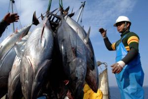 Pacific nations struggle with foreign tuna fishing. Courtesy: ABC