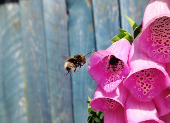 bees by Geargoe Hiles