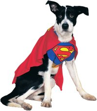 Top 10 Tuesdays: Dog Costumes - Halloween Costume Ideas