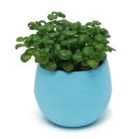 Candy Colourful Mini Slim Round Plastic Plant Flower Pot ...