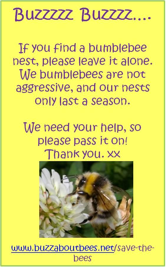 The Bumblebee Life Cycle