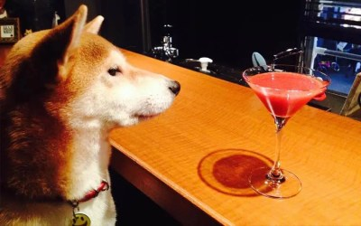 10 Dog Friendly Restaurants & Bars in NYC