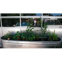 Small Crop Of Herb Garden Trough