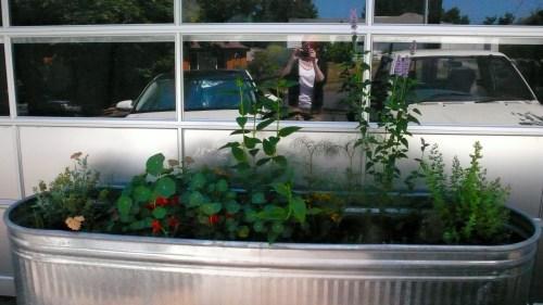 Medium Of Herb Garden Trough