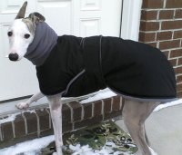 Photos: Whippet Coats, Greyhound Coats & more | Blue ...