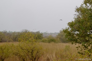 Birds at Mole National Park, Ghana
