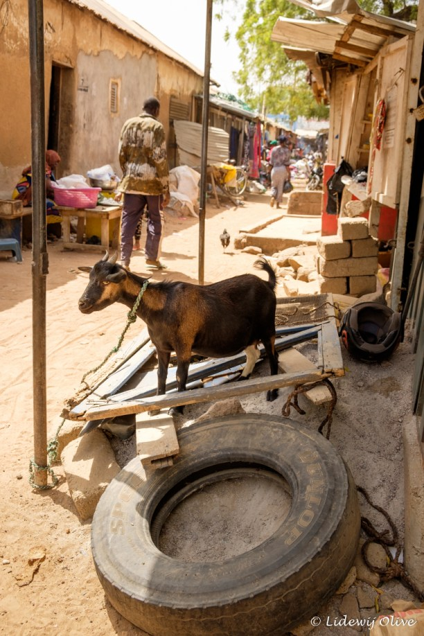 Goat at the market