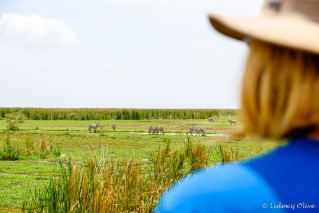 Viewing Zebra's in Manyra NP