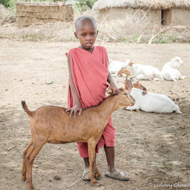 Holding a goat: all children help at the Masaai