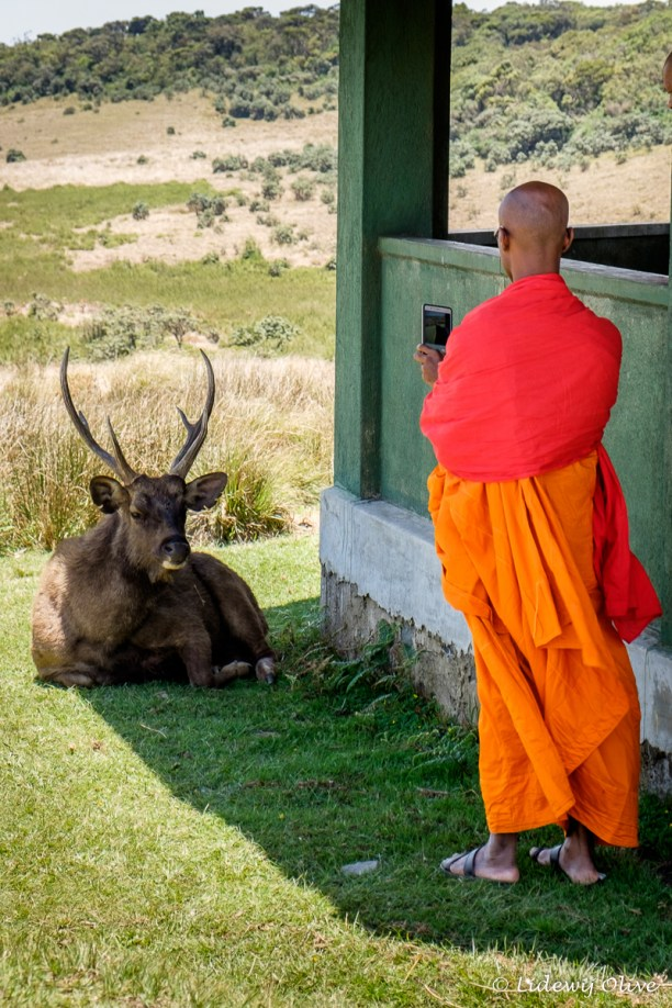 Monk photographing a deer