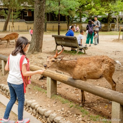 Feeding the deer with deer cookies