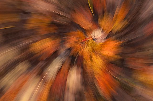 Fall Nature Scenes Wallpaper Fine Art Nature And Abstract Photography By Byron