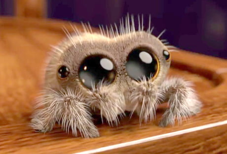 Gif Images Animated Wallpapers Fresh Tv Picks Up Animated Arachnid News C21media