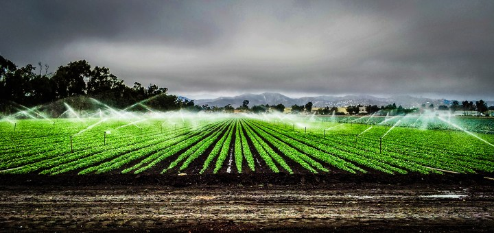 sprinkler by thomas nelson