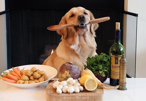 Cute Shih Tzu Puppies Wallpaper Desvantagens Da Alimenta 231 227 O Natural Cozida Para C 227 Es