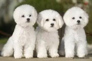 Nomes para cachorro