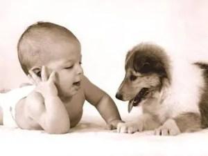 O cão e a chegada do bebê
