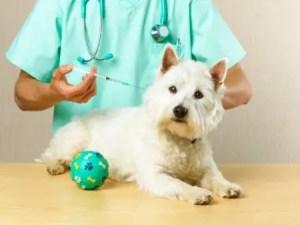 Parvovirose Canina – O que é e como tratar