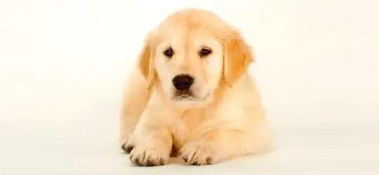 Vermifugar o cão: Qual a frequência ideal?