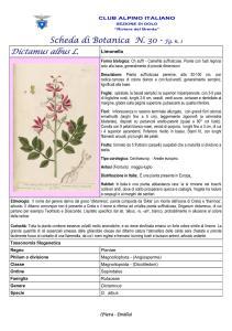 Scheda di botanica n.30 - Dictamus albus - Piera, Emilio