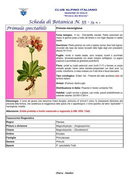 Scheda di Botanica n. 55 Primula spectabilis fg 1 - Piera, Emilio