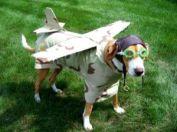 perrito-avion