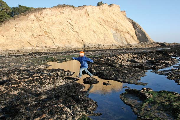Duxbury Reef Tide Pools, Bolinas, CA - California Beachesthe san
