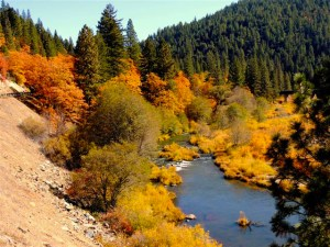 Oaks, Hwy 89, Plumas County (10/20/13) Richard McCutcheon