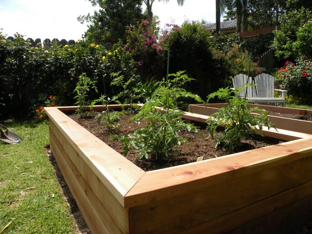 Building vegetable boxes for a greek garden california greek