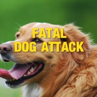 Dog Attacked and Killed in Provincial Park