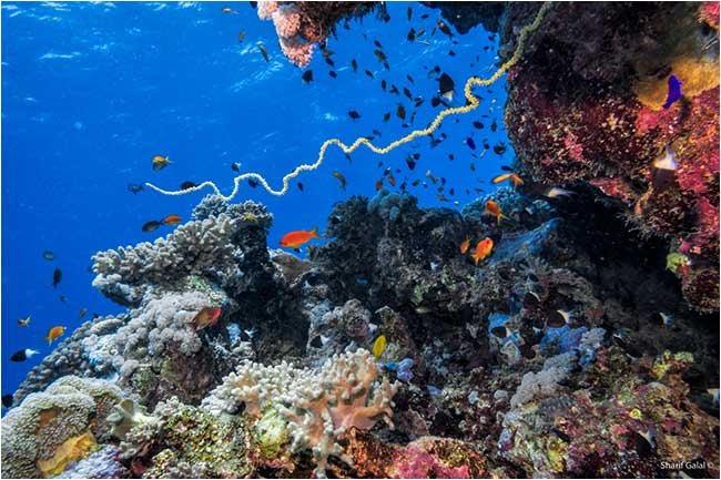 Animated Fish Tank Wallpaper Red Sea Coral Reefs Underwater Photography The Canadian