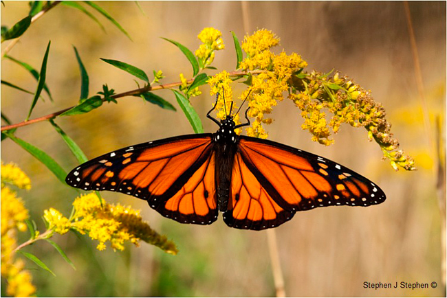 Hd Wallpapers Butterflies Widescreen The Canadian Nature Photographer Nature Photography In