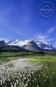 jnp0336_mountathabasca_jaspernationalpark
