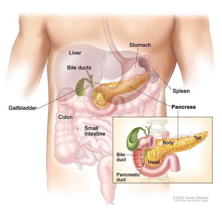 Surgical Oncology Program - Pancreatic Cancer