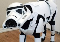 Star Wars Dog is Really Excited for the New Film