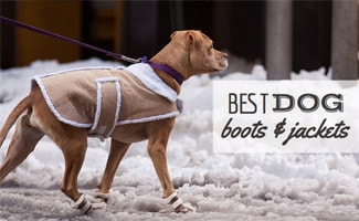 Best Dog Boots And Coats For Winter Caninejournalcom