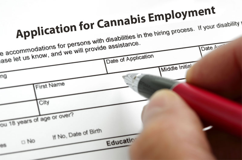 How to Apply for Marijuana Jobs Application Requirements for