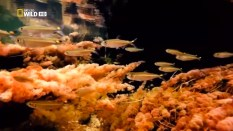 Vista aérea de Caño Cristales, por NatGeo Wild