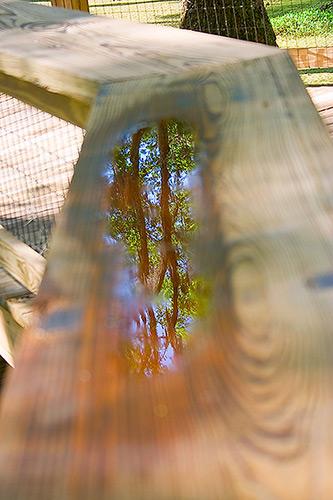 reflectoin.jpg