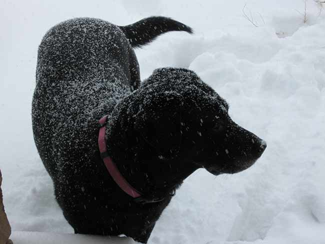 snowmoo