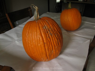 Pumpkin Trip 8