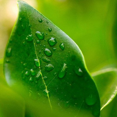 Leafy Water Drops