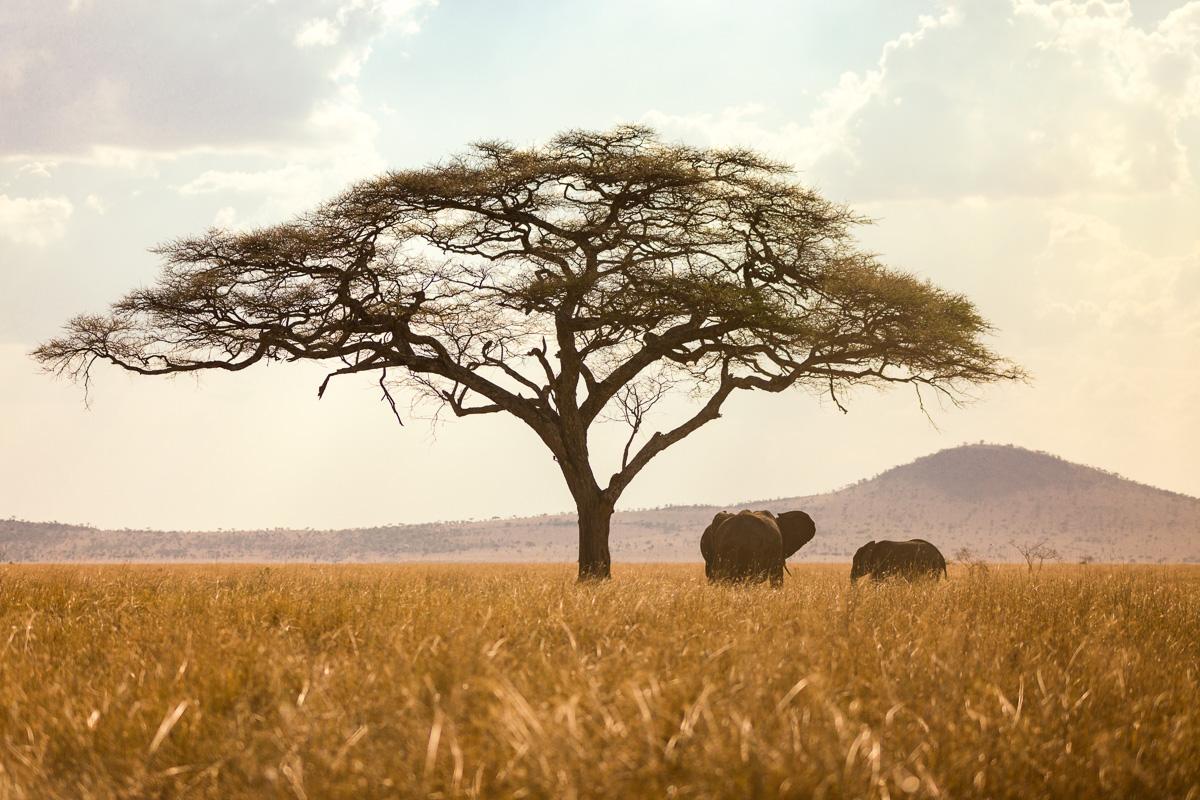 Black Home Wallpaper Serengeti Wildlife Tanzania